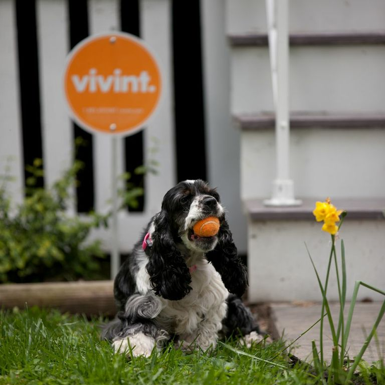prepping your pet sitter